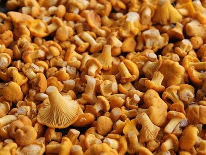 Energiereiche Lebensmittel - Pilze