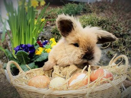 Ostern für die ganze Familie